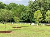 Town of Bow Evans Cemetery